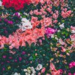 木野山ゆうが可愛い【ザコシショウCM/MVに出演】出身や高校・彼氏は?