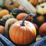 ハロウィンかぼちゃの種類と栽培方法・種まきの時期・販売