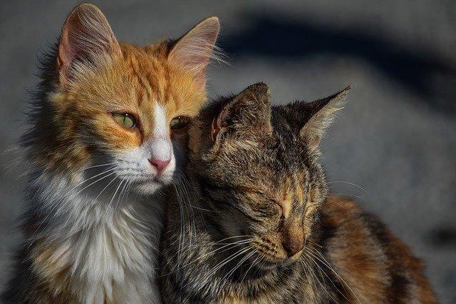 和歌山市の野良猫クラウドファンディングで炎上!ふるさと納税で詐欺?