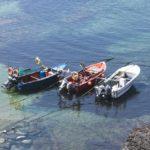 栄養塩とは何?瀬戸内海の栄養塩濃度が下がるとどうなる?