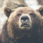 アビオシティ加賀にクマが立てこもり!侵入ルートやけが人は?
