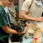 【愛玩動物看護師法】試験の受験資格と内容・国家資格で給料は上がる?
